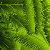 Palm Leaves Isolated. Realistic Branches Set. Vector Tropical Foliage. Floral Elements. Illustration poster