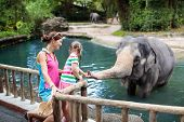 Family Feeding Elephant In Zoo. Mother And Child Feed Asian Elephants In Tropical Safari Park During poster