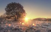 Scenery Of Autumn Nature In Morning At Sunrise. Sunbeams On Autumn Meadow With Tree. Hoarfrost On Ye poster