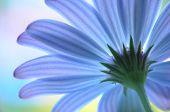 Blue Flower – Perspective Shot