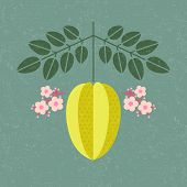 Star Fruit Illustration. Ripe Carambola With Leaves And Flowers On Shabby Background. Symmetrical Fl poster