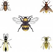 pic of bee-hive  - Detailed illustrations of a honeybee bumblebee and wasps - JPG