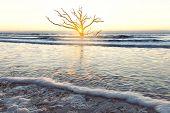 Sunrise At Botany Bay Beach, Edisto Island, South Carolina, Usa poster