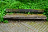 Colorful And Bizarre Mood Of Green Ivy And Wooden Bench, Weathered Wooden Bench In Focus With Moss A poster