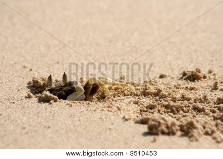 Ghost Crab Burrowing Home