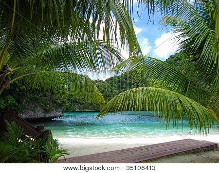 Palau Fronds Over Water