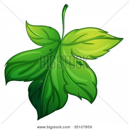 illustration of a green leaf on a white background