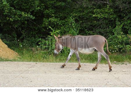 Donkey On The Road