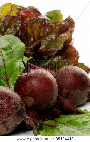Bunch Of Perfect Raw Beets And Haulm