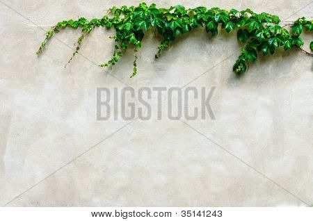 Frame From Green Leafs On Grunge Wall Background With Space For Text