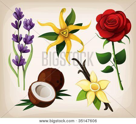 Flowers_flavors