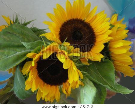 Adaas Sunflowers