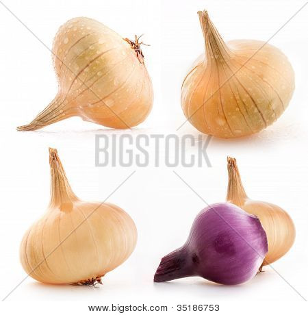 Collection of onions