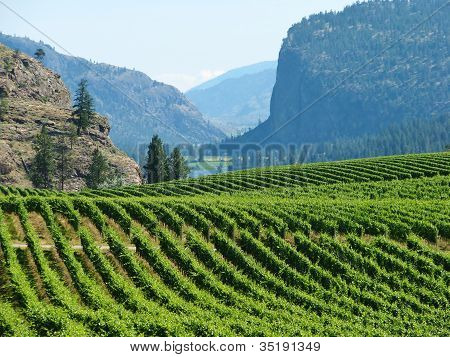 Vineyards of the Okanagan Valley