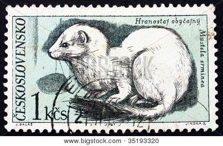 Postage stamp Czechoslovakia 1967 Ermine
