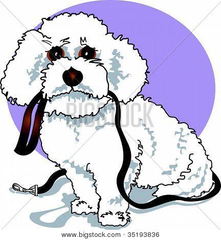 Poodle Clip Art