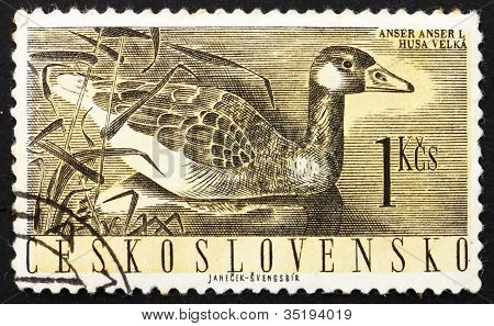 Postage stamp Czechoslovakia 1960 Greylag Goose, Anser Anser
