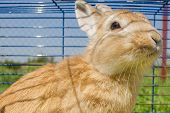 foto of rabbit hutch  - Brown rabbit in cage - JPG