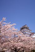 stock photo of fukushima  - Aizuwakamatsu Castle and cherry blossom in Fukushima - JPG
