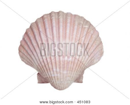 Isolated Mermaid Beach Shell