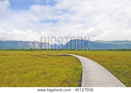 Boardwalk Into The Wilderness