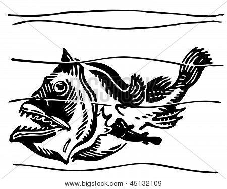 Fish Ogcocephalidae