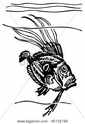 Fish John Dory