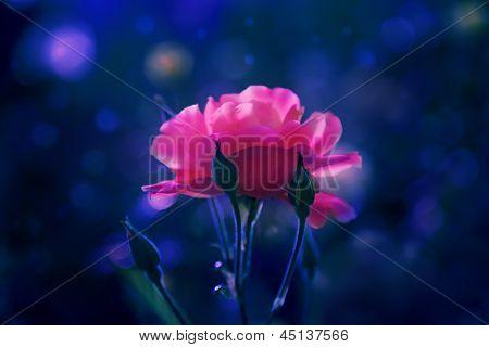 Scharlachrote Blume In der Nacht