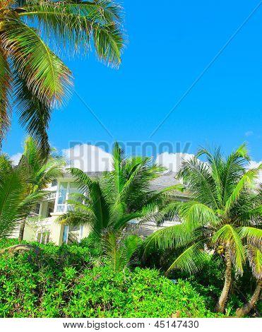 Paradise Palms Copse of Trees