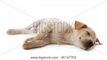 Perro de cachorro acostado