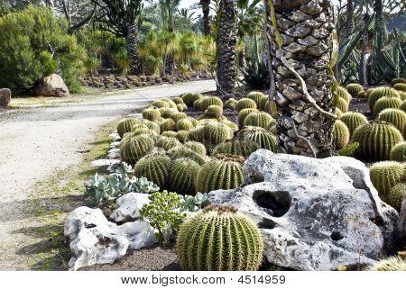 Cactuses Garden