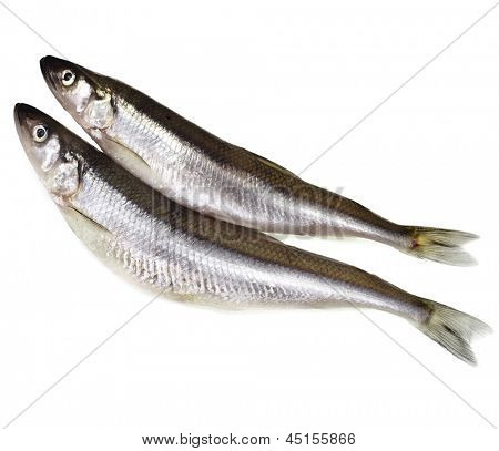 fresh smelts fish ( Osmerus eperlanus) isolated on white background