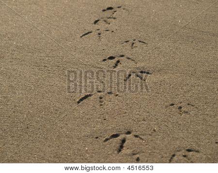 Bird Foot Print
