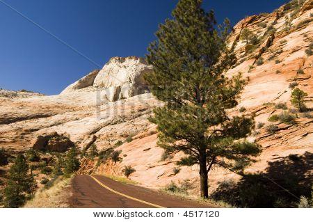 Road Through Zion