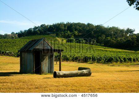 Shack In A Vineyard