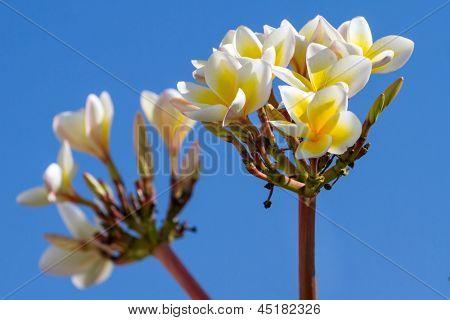 Kleine hübsche weiße Blüten vor blauem Himmel Hintergrund
