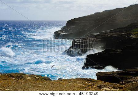 Rocky coast of Oahu