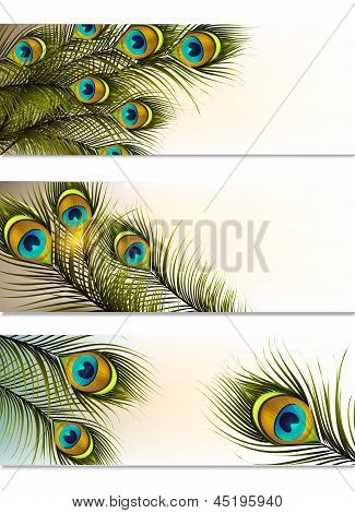 Business Cards Vector Set With Peacock Ferns