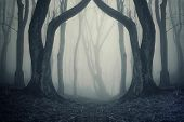 stock photo of midnight  - Dark eerie forest scene with fog and twin trees on halloween - JPG