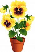 picture of plant pot  - Vector illustration  - JPG