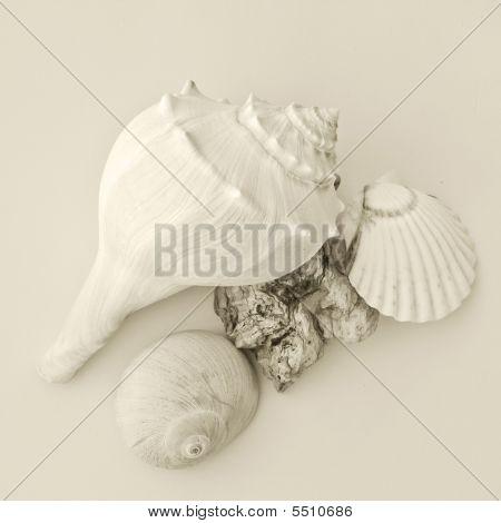 Shells & Driftwood