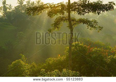 Sunrise over Bali jungle