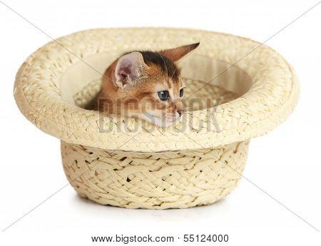 Cute Small Kitten Sitting In A Hat