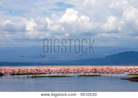 Flamingo Birds Sitting In A Lake