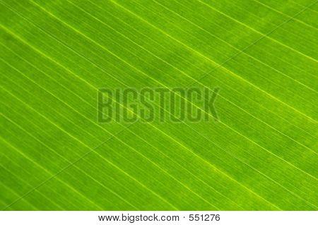 große grüne Pflanze Leaf makro