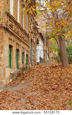 Street Strewn With Fallen Leaves.