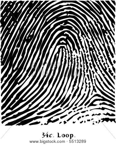 Fingerprint Loop