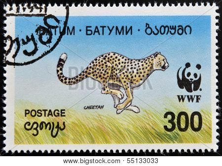 A stamp printed in Batumi shows cheetah