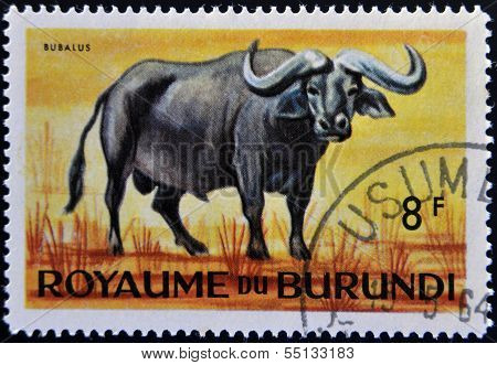 stamp printed in Kingdom of Burundi shows an African animal - Buffalo