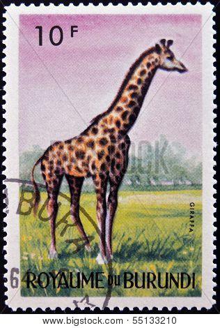 stamp printed in Kingdom of Burundi shows an African animal - Giraffe